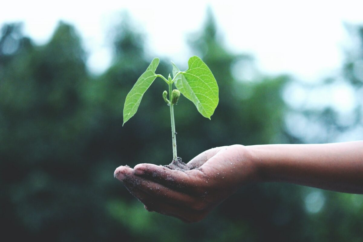 organisation en écologie